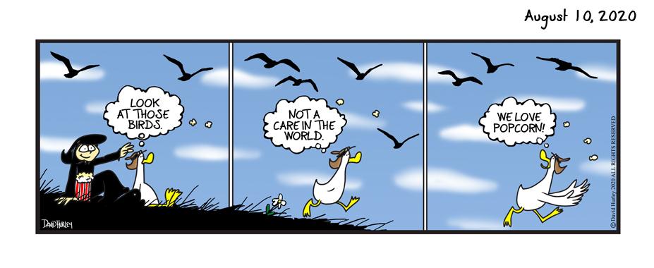 Bird Snacks (08102020)